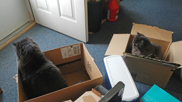 Dougy (on left) in his box; Andy in his. The boys worked it out, then Dougy ran off on cat business, leaviong both boxes to Andy. More about that tomorrow!