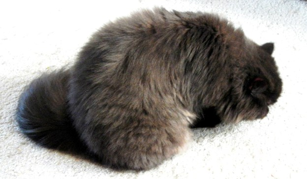 Something smells interesting on the carpet...