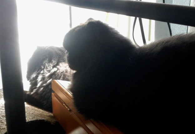 Dougy beat Andy to the cat lounger, but that left the flag holder, another favorite roosting place, open for occupation.