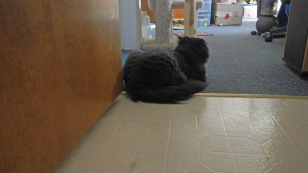 Here, Dougy makes sure I can't leave the bathroom without stumbling over him!