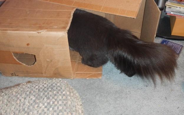 Woohoo! Dougy's on secret cat business...!