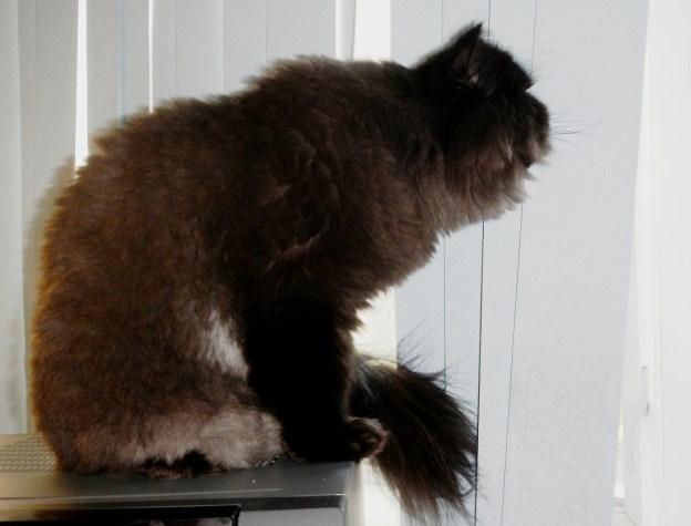 Dougy sees a bird!