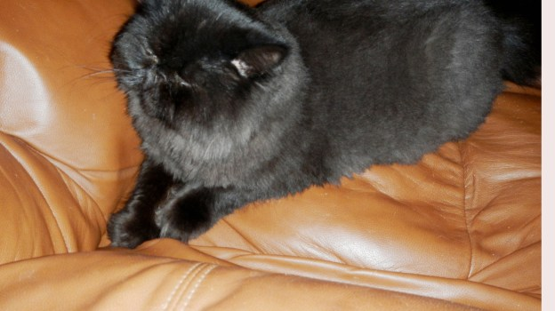 """""""Maybe I can hide on thew recliner..."""" Dougy tries to disappear from the naughty photographer!"""
