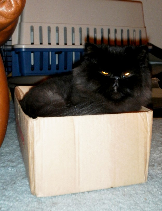Woohoo! A new box for Dougy!