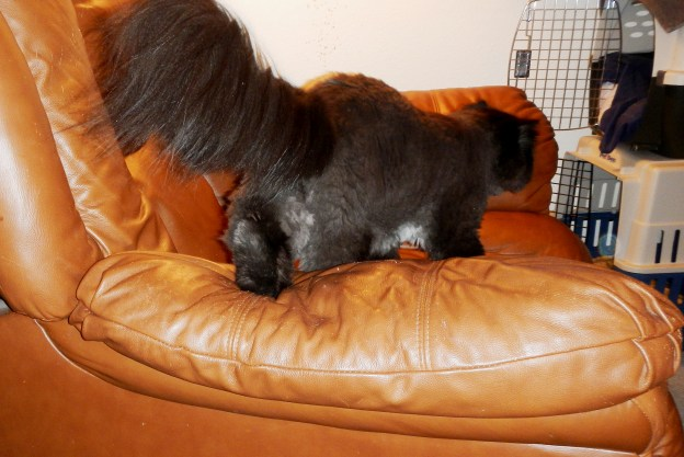 Dougy's going to snooze on the recliner, I bet! There he goes now!