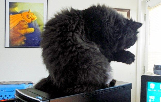 Of course, the top of my computer still works fine for Andy's baths, too!