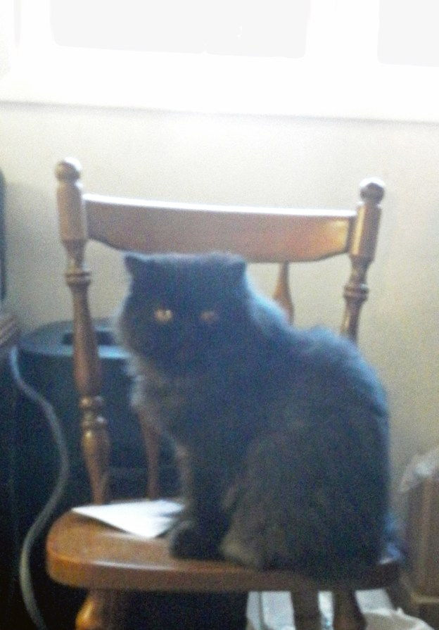 Dougy's scouting the bird feeder from this chair by the window....