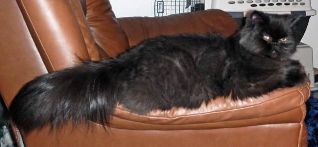 Andy changes positions to another favorite spot on the recliner.