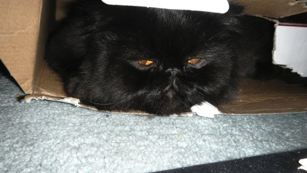 """Dougy likes to hide in the skinny box and snatch """"prey"""" when it walks by barefooted."""