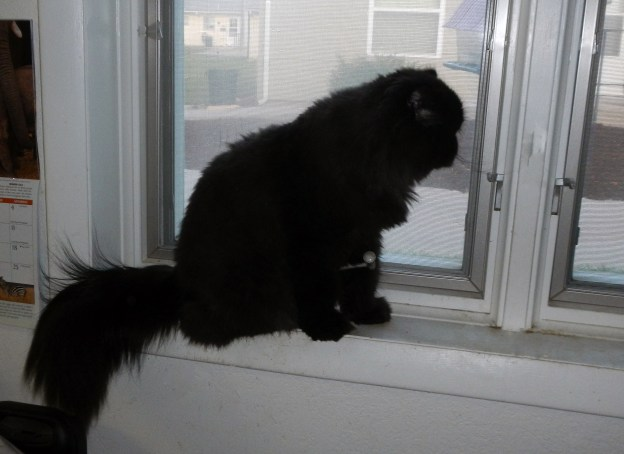 Dougy watches birds.