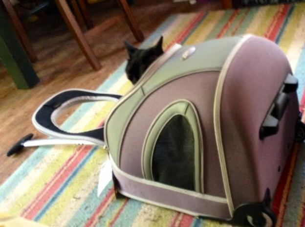 Carrier or, put on its side, a cat bed!