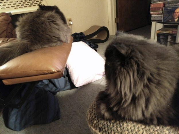 102516 dougy sees andy on recliner use me.jpg
