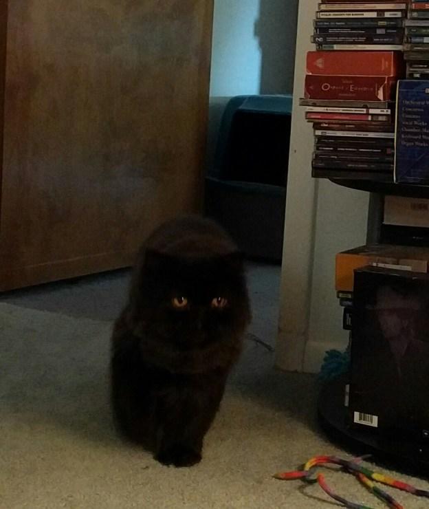 La! La! La! Mr. Kool Kat (AKA Dougy) returns to the living room.