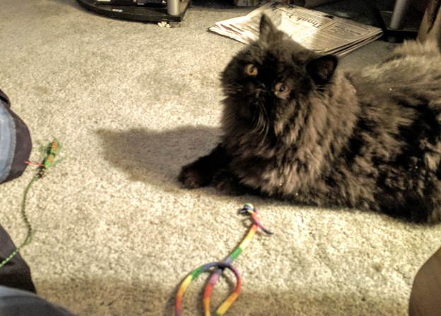 """""""...or whine at the human and meow him into playing with me?"""""""