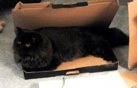 dougy in box 1