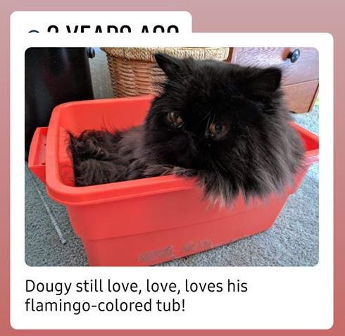 dougy in flamiongo tub