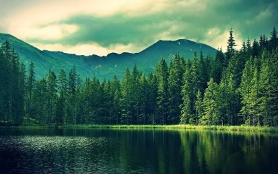 Forest with lake dildo inspiration pic