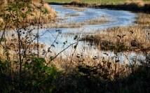 meandering creek
