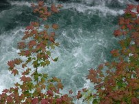 Looking down at Vine Maples over water