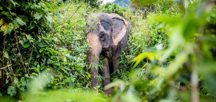 Nations Trust WNPS Public Lecture Sheds Light on Elephant Conservation   LankaTalks