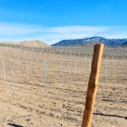 Redeveloping Sundial Vineyard