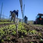 Photo Gallery: Planting Sundial