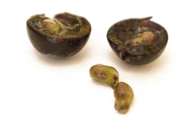 Green Grape Seeds