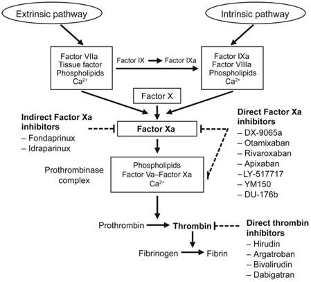 Targets for anticoagulant drugs in the coagulation cascade