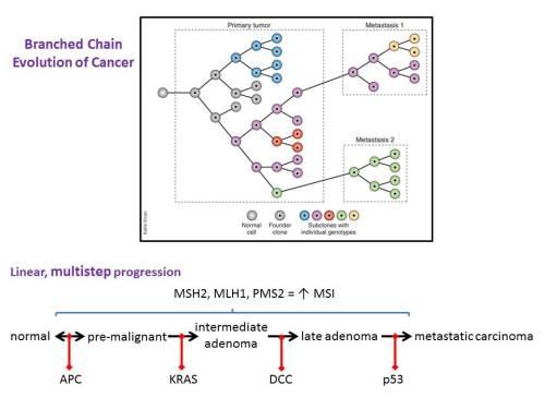 branced chain evolution cancer
