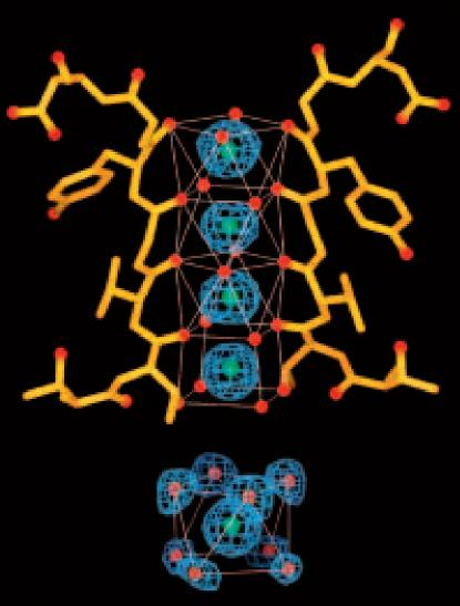 MacKinnon Fig 7 K+ channel mimics the hydration shell surrounding a K+ ion