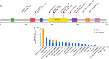 SMARCA4 mutations in SCCOHT and TCGA samples.close
