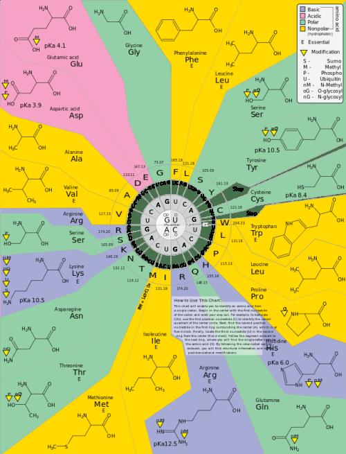 Genetic Code mapped