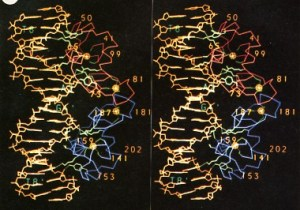 steroid hormone receptor
