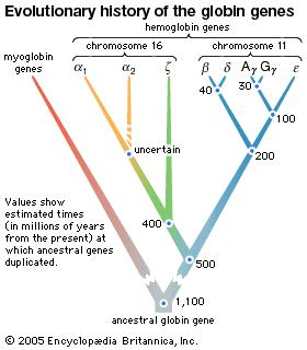 evolutionary history of three hypothetical living species (C, D, and E)