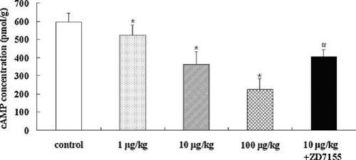 Effects of angiotensin II (Ang II) on cyclic adenosine monophosphate (cAMP)