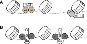 Model for G9a-GLP complex transcriptional activity in the hippocampus