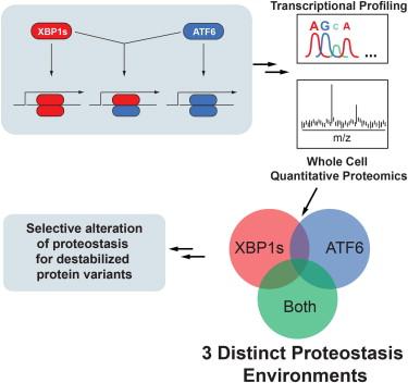 3 proteostasis envronments