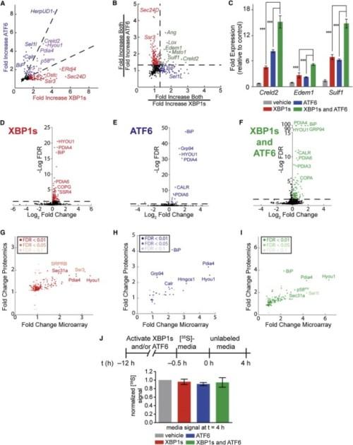Integration of Transcriptomics and Proteomics Reveals Three Distinct ER Proteostasis Environments