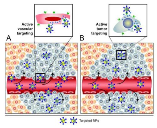 Nanoparticles with ligands specific for endothelial cell surface markers nihms-401532-f0003