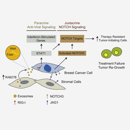 stromal-communication-with-cancer-cells