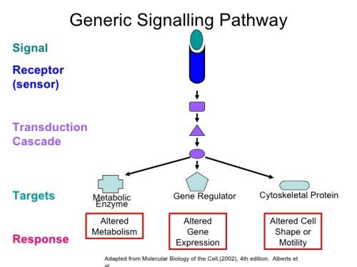 cancer-signal-transduction-3-728