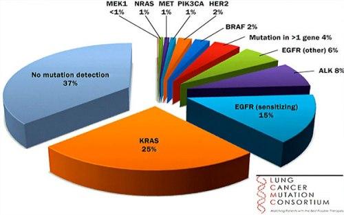 Molecular testing of biopsied lung tumors