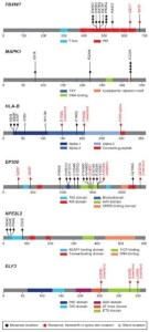 Novel recurrent somatic mutations in cervical carcinoma