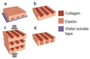 Tissue engineering-2