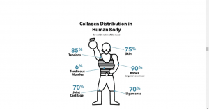 where is collagen in the human body