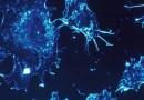 نظرة جديدة إلى آلية هروب الخلايا السرطانية من الخلايا المناعية