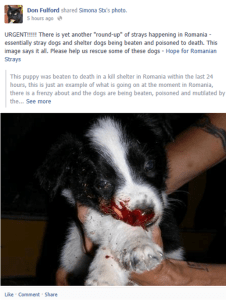 One of Don's posts for Hope for Romanian Strays