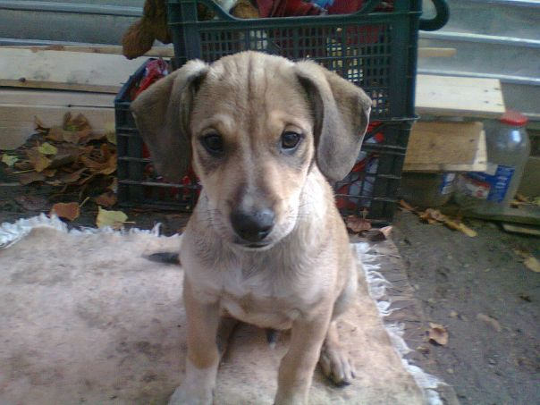 This puppy won't survive alone on the streets - will you help her?