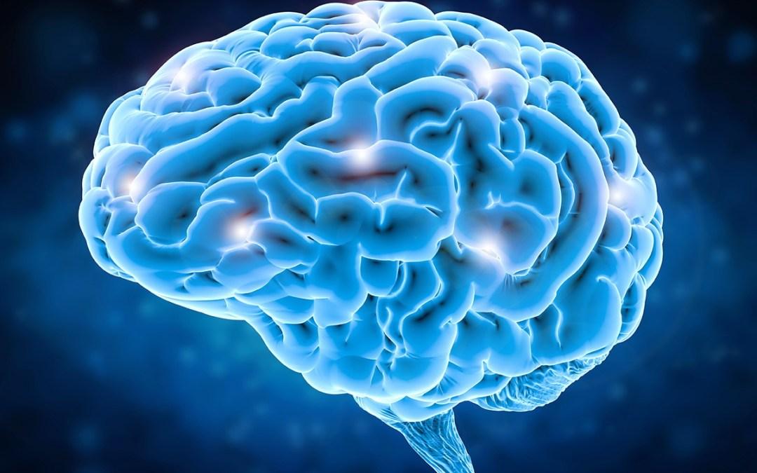 Hashimoto's brain
