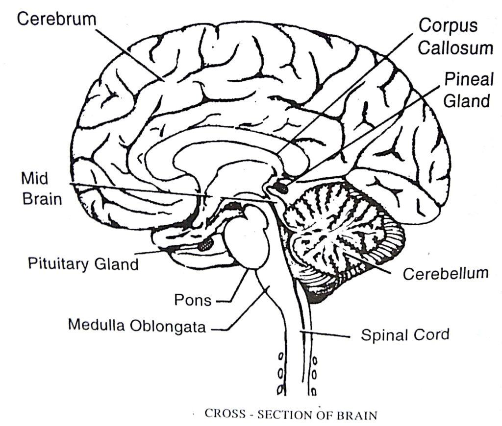 Questions for Pharma Interview related to body system